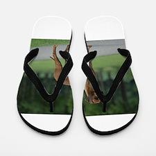 rhodesian ridgeback full 2 Flip Flops