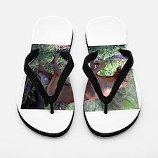 rhodesian ridgeback full Flip Flops