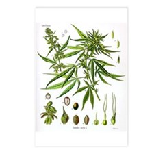 Cannabis Sativa Postcards (Package of 8)