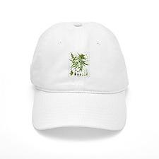 Cannabis Sativa Baseball Cap