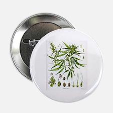Cannabis Sativa Button