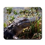 Alligator Photo by W. P. Photography Mousepad