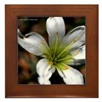 """Flower"" Framed Tile"