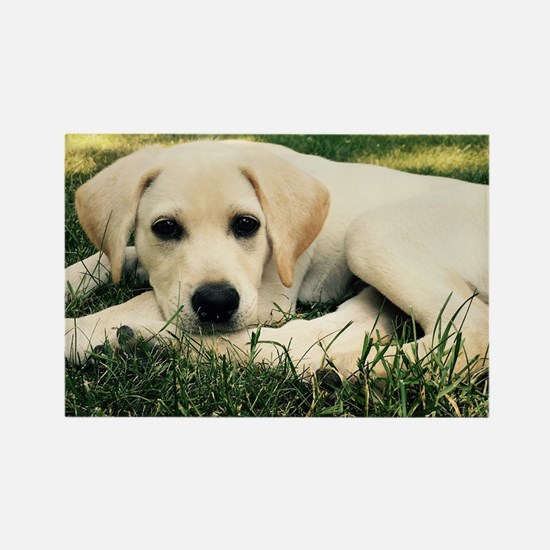Funny Yellow lab Rectangle Magnet