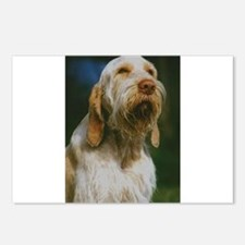 spinone italiano Postcards (Package of 8)