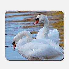 Beautiful Swans Mousepad