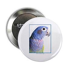 Blue-Headed Pionus - Button (10)