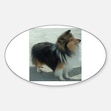 shetland sheepdog full Decal