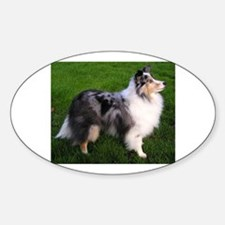 shetland sheepdog full 2 Decal
