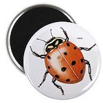 Ladybug Beetle 2.25