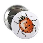 Ladybug Beetle Button