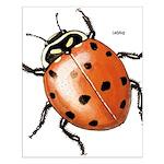 Ladybug Beetle Small Poster