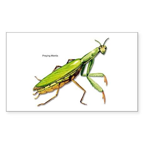 Praying Mantis Insect Rectangle Sticker