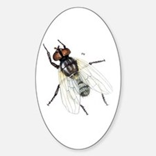 Fly Insect Oval Decal