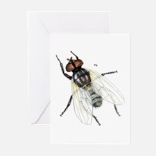 Fly Insect Greeting Cards (Pk of 10)