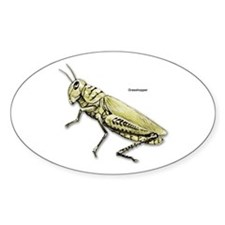 Grasshopper Insect Oval Decal