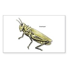 Grasshopper Insect Rectangle Decal