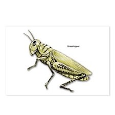 Grasshopper Insect Postcards (Package of 8)