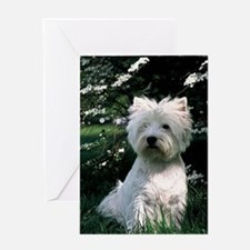 4 siting westie Greeting Cards
