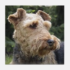 welsh terrier Tile Coaster