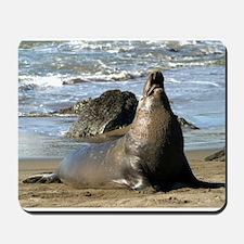 Elephant seal Mousepad - Northern Elephant Seal