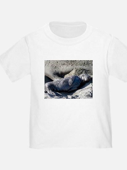 elephant seal T - pup & seals