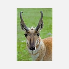 Pronghorn Face Rectangle Magnet