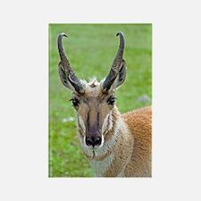 Pronghorn Face Rectangle Magnet