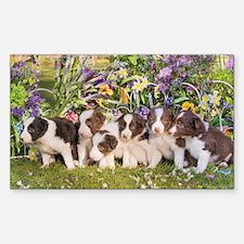 Unique Border collie puppies Decal