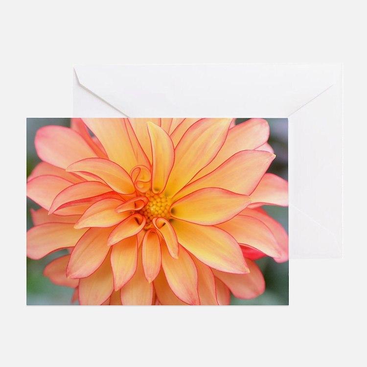 Cute Greetingcard Greeting Card