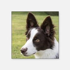 "Cute Border collie Square Sticker 3"" x 3"""