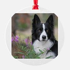 Cute Border collie Ornament