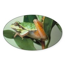 Tree Frog Oval Decal
