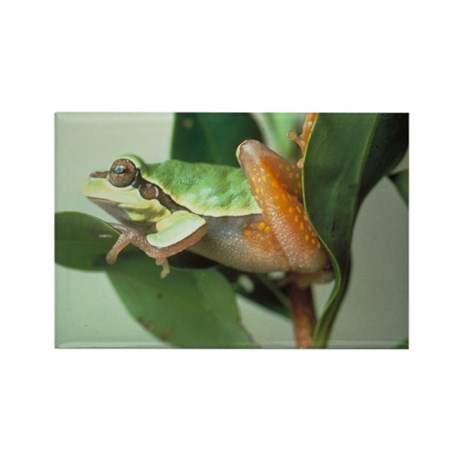 Tree Frog Rectangle Magnet (10 pack)