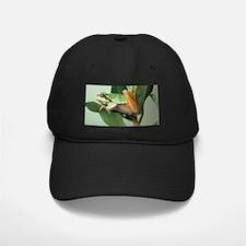 Tree Frog Baseball Hat