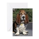 Basset hound Greeting Cards (10 Pack)