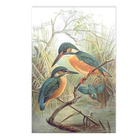 Kingfisher Postcards (Package of 8)