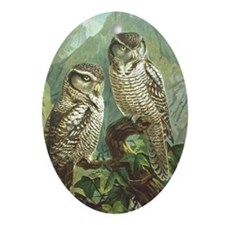 Hawk Owl Oval Ornament