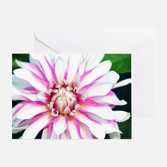 Unique Beauty in nature Greeting Card