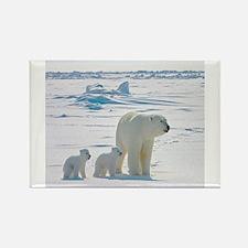 Polar Bears Magnets