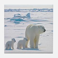 Polar Bears Tile Coaster