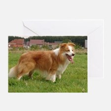 Golden Red Border Collie Greeting Card
