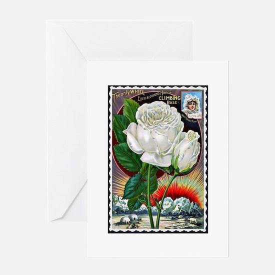 Vintage White Climbing Rose Greeting Card
