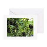 Ferns Greeting Cards (20 Pack)