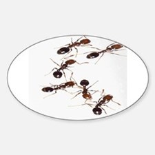 Fire Ants Decal