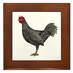 Chicken (Doming) Framed Tile
