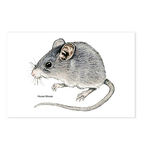 Mouse Rodent Postcards (Package of 8)