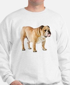 Cute English bulldog Jumper