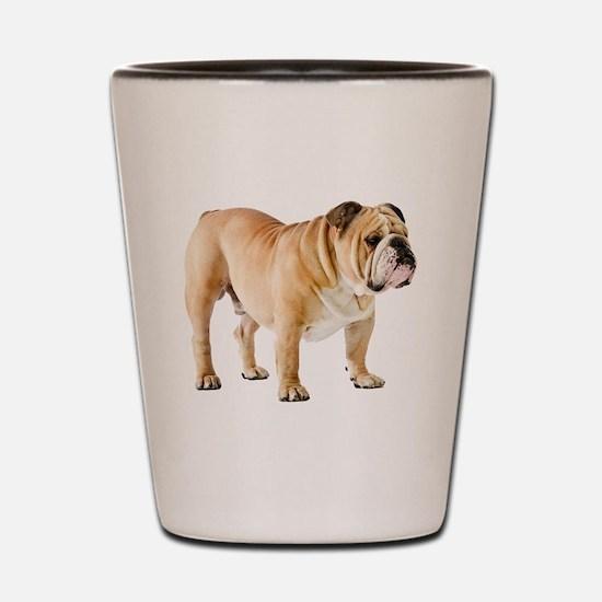 Funny English bulldog Shot Glass