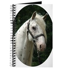 Spanish Jennet Stallion Journal